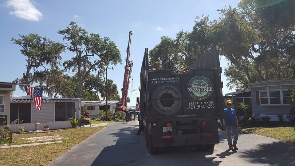 Rockledge tree trimming