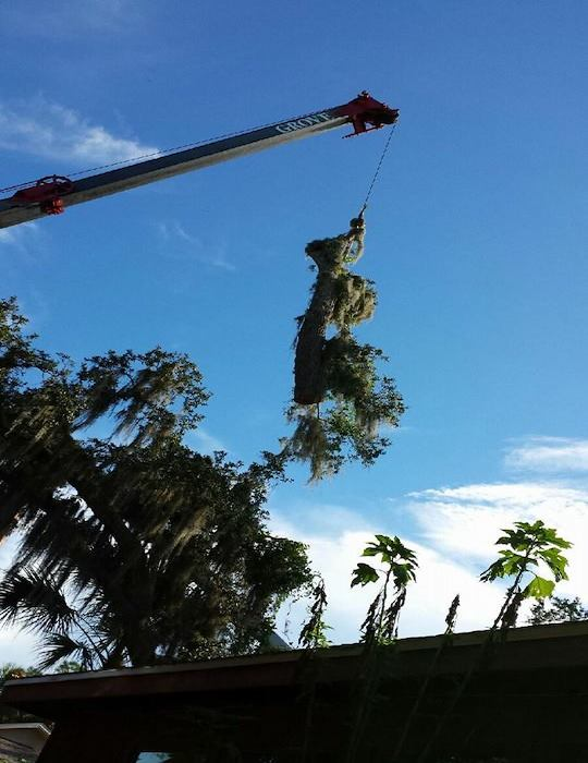 tree cutting services Rockledge